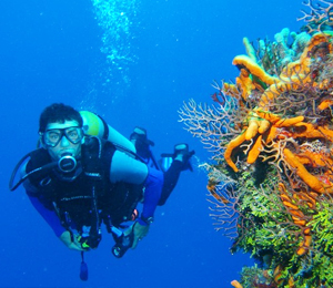Nassau Scuba Dive