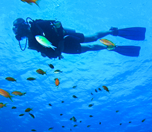 Nassau Scuba Diving Trips