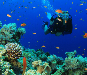 Nassau Scuba Diving Certification