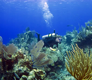 Current Nassau Scuba Dive Specials