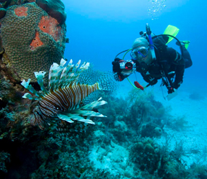 Nassau Scuba Diving FAQ's